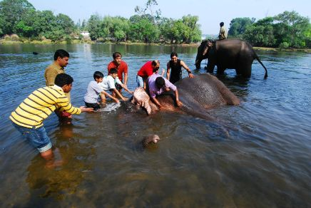Dubare Elephant Camp